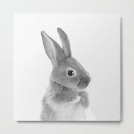 Little Rabbit Metal Print