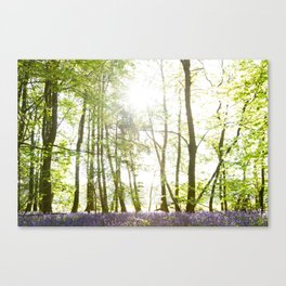 Sunlight Shining on Bluebells in a Woodland Canvas Print