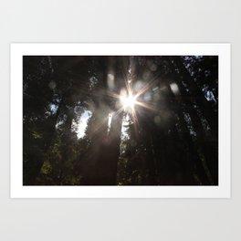 Sunshine through Redwoods at Muir Woods Art Print