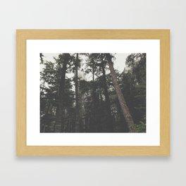 Woods 1 Framed Art Print