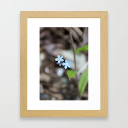 Two Forget-Me-Nots Framed Art Print