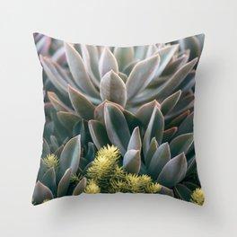 Graptoveria Study #3 Throw Pillow