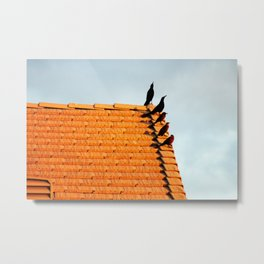 Birds Congregate on the Roof Metal Print