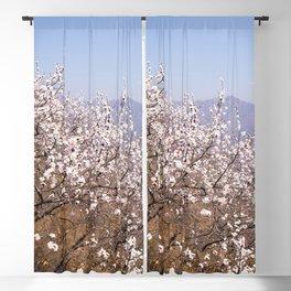 Blooming Spring - Sakura in Beijing - China #decor #society6 #buyart Blackout Curtain