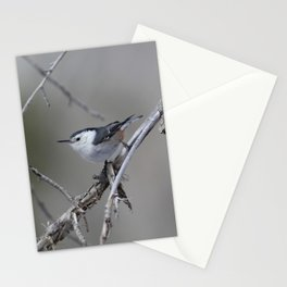 White-breasted Nuthatch Stationery Cards