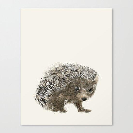 little hedgehog Canvas Print