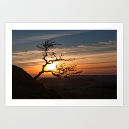 Black Mountain tree Art Print