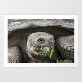 Do I have something in my teeth? Art Print