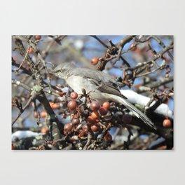 Mockingbird Snack Time Canvas Print