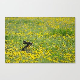 Dandelion Hare Canvas Print