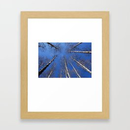 Nature: The trees trunk with  blue sky background. Framed Art Print