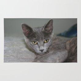 Beautiful Portrait of A Grey Russian Cross Tabby Cat  Rug