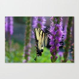 Swallowtail Summer Canvas Print