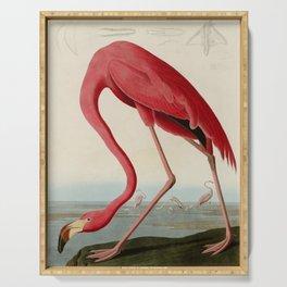 American Flamingo by John James Audubon, Vintage Illustration Serving Tray