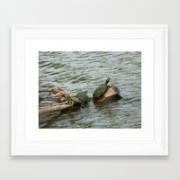 turtles Framed Art Prints featuring turtles by Dantastic Photos