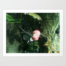 Organ Fungi Art Print