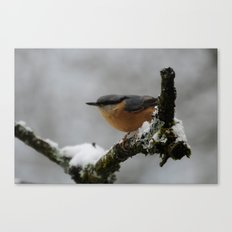 Nuthatch in the winter Canvas Print