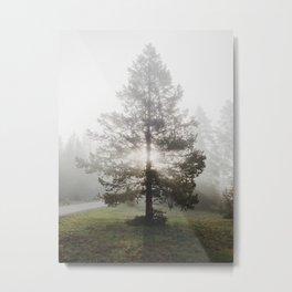 Norris Rays Metal Print
