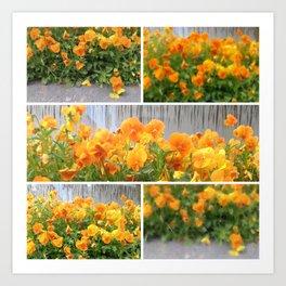 Orange Pansies Collage Art Print