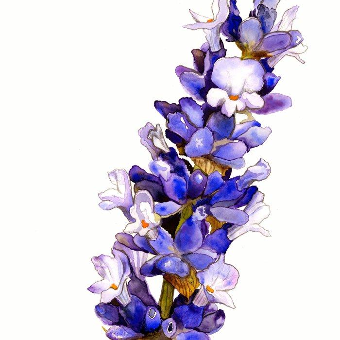 Mediterranean Lavender on White Leggings