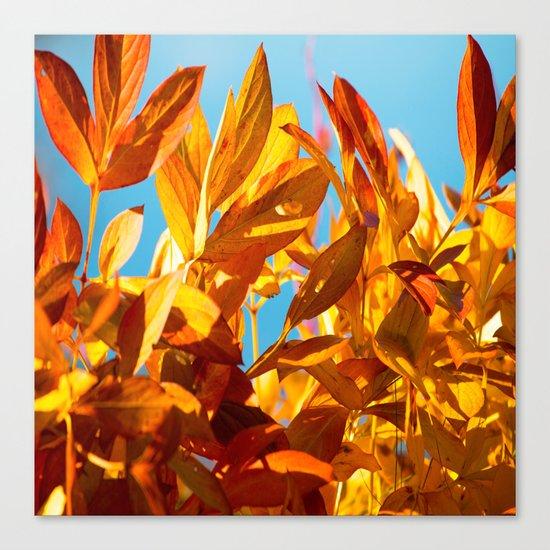 Autumn colors leaves against the blue sky Canvas Print