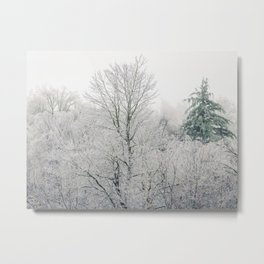 A forest of white icy trees and one lonely evergreen fill the mountain hilltops. Metal Print