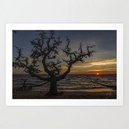 Colington Tree sunset Art Print