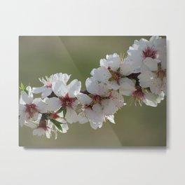 Almond Blossom Series 5 Metal Print
