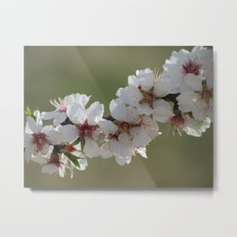 Almond Blossom Series 5 Metal Print