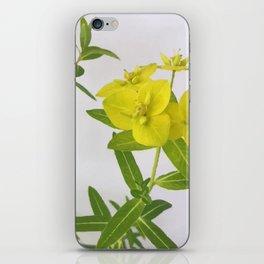 Euphorbia Cornigera iPhone Skin