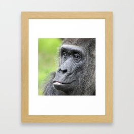 Gorilla_20141202_by_JAMFoto Framed Art Print
