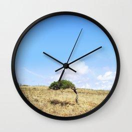 Divi-divi Wall Clock