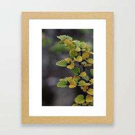 Fagus Framed Art Print