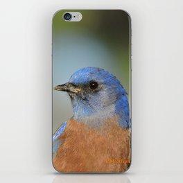 Bluebird in La Verne iPhone Skin
