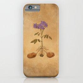 Anatomy of a Potato Plant iPhone Case
