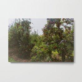 Apple Orchard Metal Print