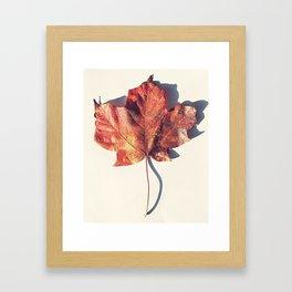 Red Leaf 2 Framed Art Print