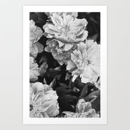 Flora Collection II Art Print