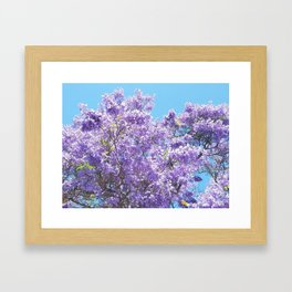 Jacaranda in bloom Framed Art Print