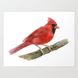 Red Cardinal Watercolor Art Print