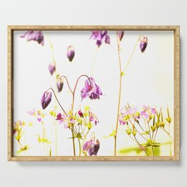 Purple Columbine Flower White Background Serving Tray