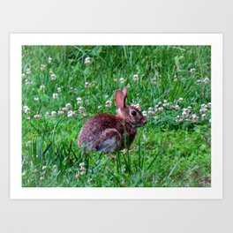 Bunny In The Meadow Art Print