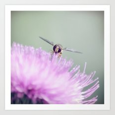 insect ~ sunny garden impression Art Print