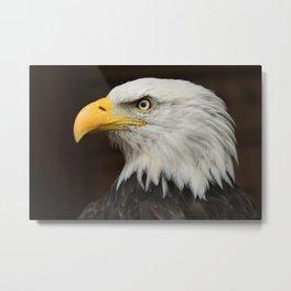 Eagle Photography | Nature | Wildlife Art | American Eagle | Rustic Wall Art | Animal  Metal Print