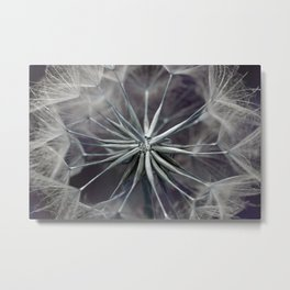 Meadow Salsify 5143 Metal Print