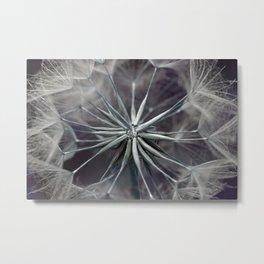 Meadow Salsify 5143 Metal Print