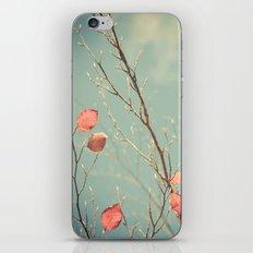 The Winter Days of Autumn iPhone & iPod Skin