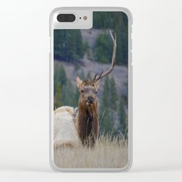 Elk with one antler in Jasper National Park | Canada Clear iPhone Case