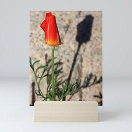 Shadowed Poppy Mini Art Print