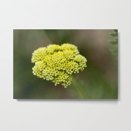 Yellow Flower - Original Botanical Nature Photography - Flora Art  Metal Print